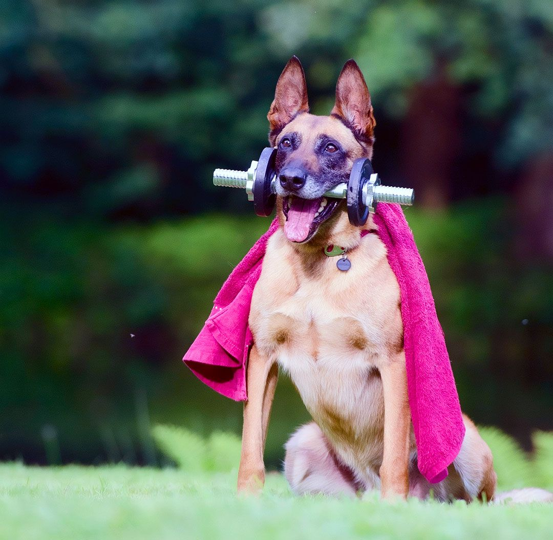 Power Lifting Dog Super Hero