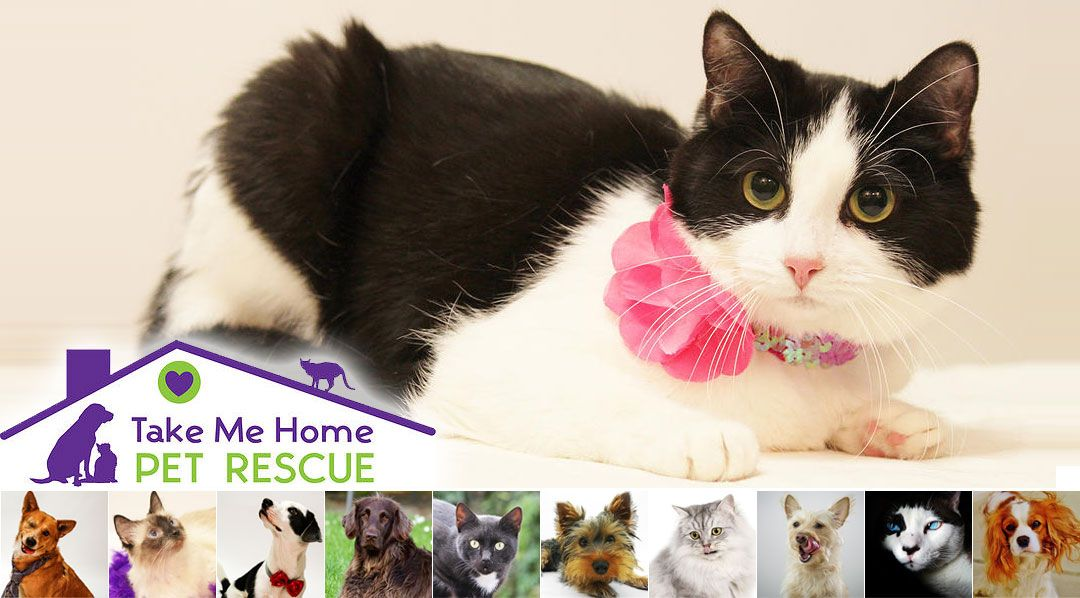 Take Me Home Pet Rescue Banner
